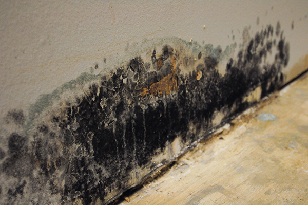 Mold Remediation for Newark, NJ and Essex County