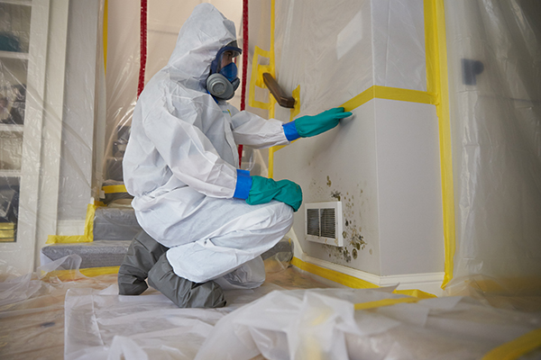 Mold Remediation for Bergen County, NJ