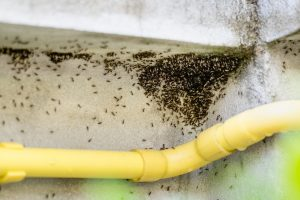 Ant-Nests-In-Bathroom-Staten-Island-IL
