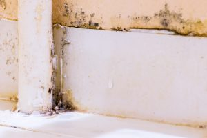 Mold-Visible-Growth-In-Staten-Island-IL